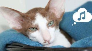 聞き入る猫